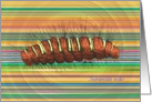 Seirarctia echo Caterpillar Striped Card