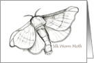 Silkworm Moth, black & white. card