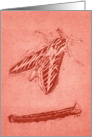 White-Lined Sphinx Moth card