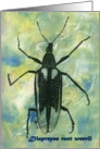 Diaprepes Root Weevil card