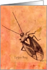 Lygus Bug on orange background card