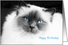 Perfect birman cat - happy birthday card