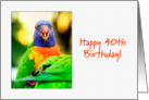 Happy 40th Birthday - Rainbow Lorikeet card