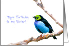 Blue and green tropical bird - Happy Birthday Sister card