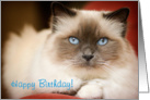 Perfect Blue Birman cat - Happy Birthday card