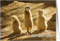 Three meerkats - Get Well Soon card