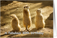 Three meerkats - Happy 30th Birthday card