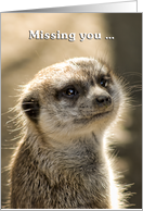 meerkat - missing you so much card