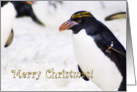 merry Christmas, Rockhopper Penguin - humor card