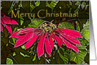 Red Poinsettia, Merry Christmas card
