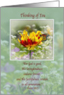Thinking of You, Tulip and Butterfly card