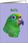 Hi/Hello, Green Parrot card