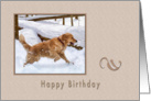 Birthday, Golden Retriever Dog in Snow card