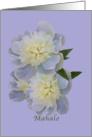 Thank You, Hawaiian, Mahalo, White Peony Flowers card