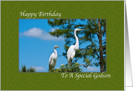 Godson's Birthday Card with Two Egrets card