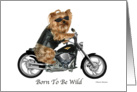 Yorkie Biker, Born To Be Wild Birthday card