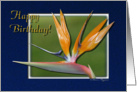 Happy Birthday Bird Of Paradise Exotic Tropical Flower in 3D card