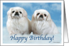 Happy Birthday Pekingese card