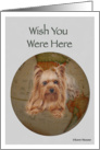 Earth, Wish you were here Yorkie card