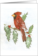 Cardinal and Holly card