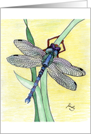 Dragonfly on Grass card