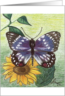 Moth on a Sunflower card