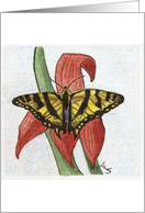 Yellow Swallowtail card