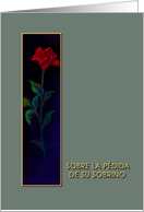 Spanish, Loss of Nephew, Sobrino, Red Rose, Sympathy Card
