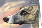 Brindle greyhound whippet dog Card
