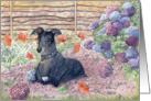Greyhound dog helping in the garden Card