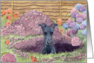Greyhound dog sitting in the hole he's dug in the garden Card