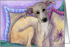 Greyhound whippet dog sitting in cushions Card