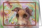 Greyhound whippet dog hiding in the garden Card