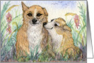 Welsh Corgi dogs teasing - give us a kiss luv! Card