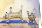 Corgi dogs practicing yoga together card