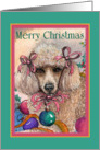Merry Christmas. Christmas poodle. card