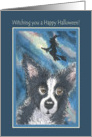 Happy Halloween, border collie with witch flying overhead. card