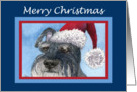 Merry Christmas, schnauzer in santa hat card
