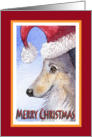 Merry Christmas, sheltie in santa hat card
