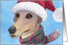 greyhound, blank card, christmas, hat and scarf, card