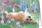 Corgi dog rolling in the herbaceous border card