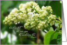 Sympathy, White Lilac in Rain, Teardrops Poem, For 'Him' card