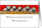 Congratulations, Wedding, Funny, From Dogs, 5 Pug Puppies card