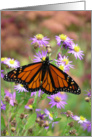 Monarch Butterfly II card