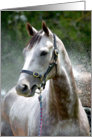 Wet White Horse card