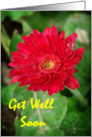 Red Flower Get Well Soon card