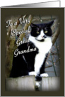 Great Grandma Cat on the Fence card