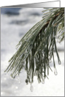Spring is Coming - Icy Pine Needles Greeting Card