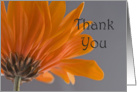 Orange Daisy Thank You Note card