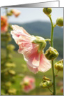 Happy Mother's Day: Hollyhock card